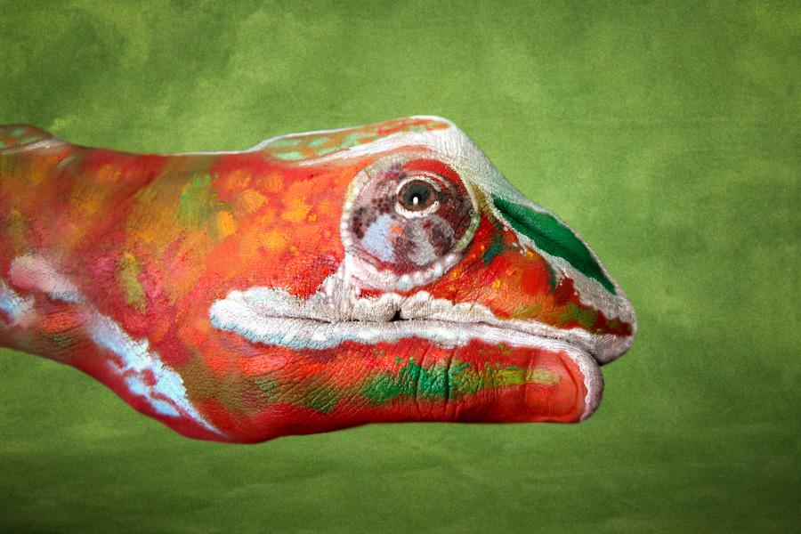 My chameleon hand